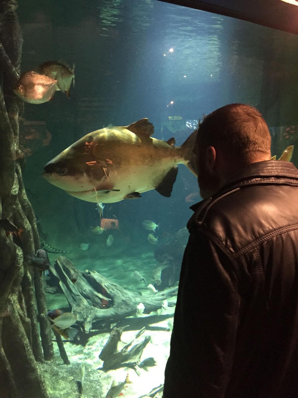 Giant Fish!